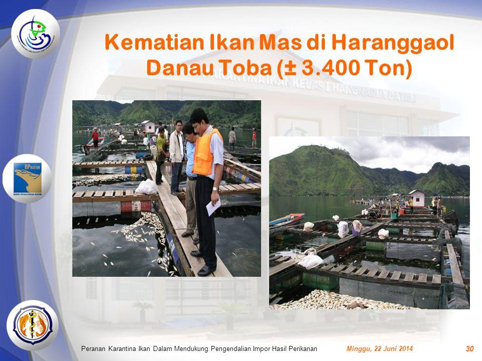 Kematian Ikan Mas di Haranggaol Danau Toba (± 3.400 Ton)