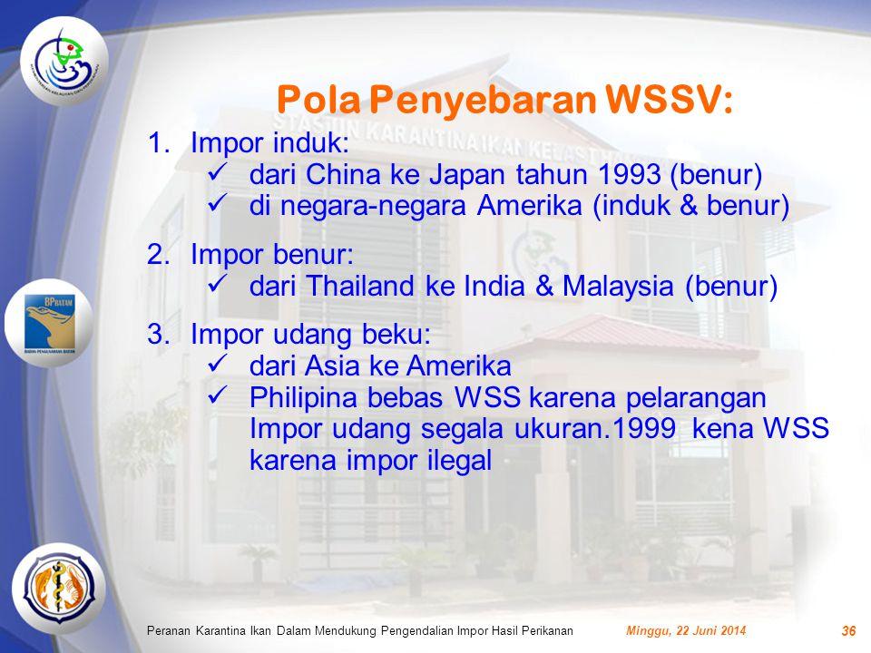 Pola Penyebaran WSSV: Impor induk: