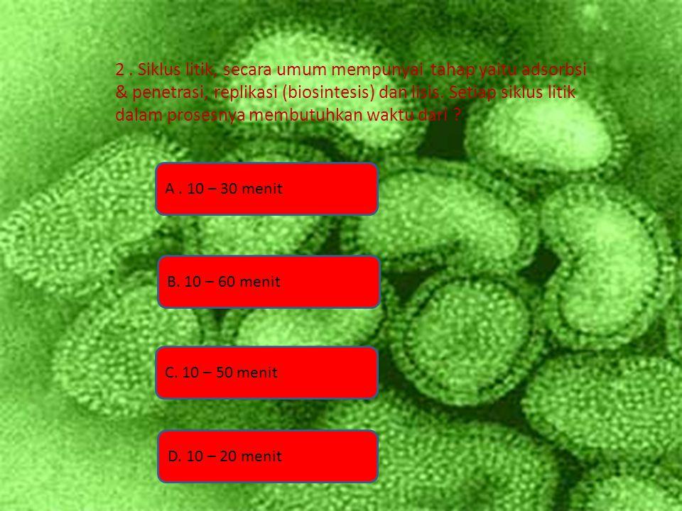 2 . Siklus litik, secara umum mempunyai tahap yaitu adsorbsi & penetrasi, replikasi (biosintesis) dan lisis. Setiap siklus litik dalam prosesnya membutuhkan waktu dari