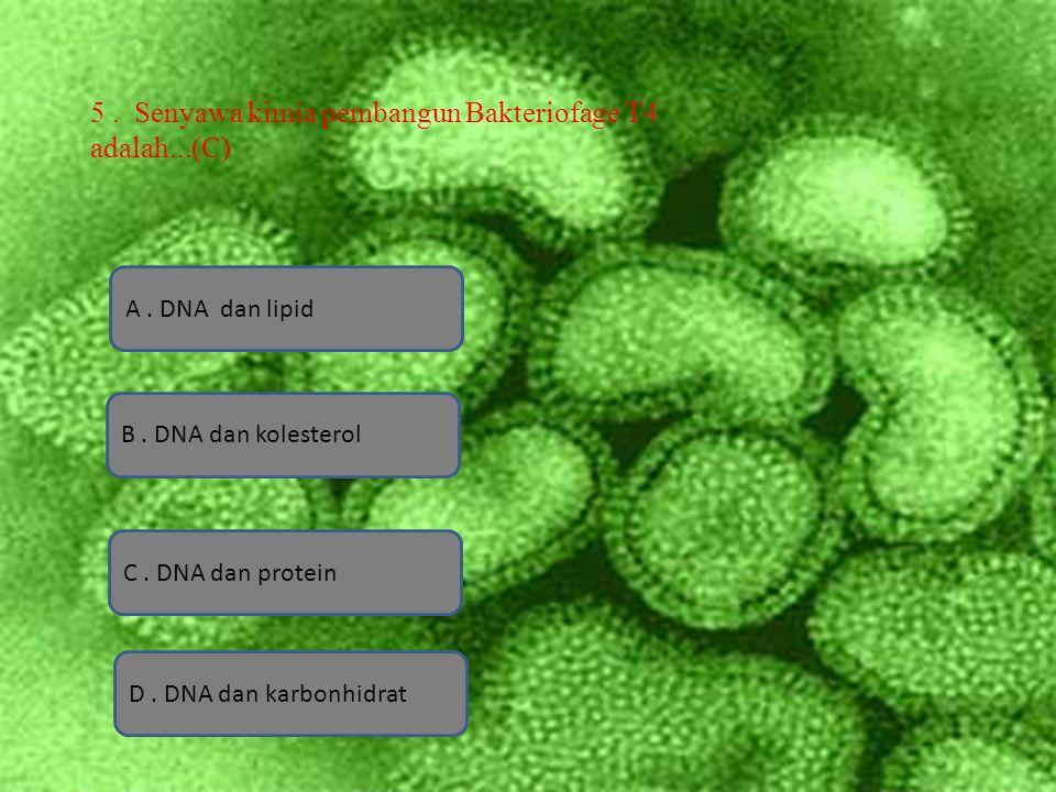 5 . Senyawa kimia pembangun Bakteriofage T4 adalah...(C)