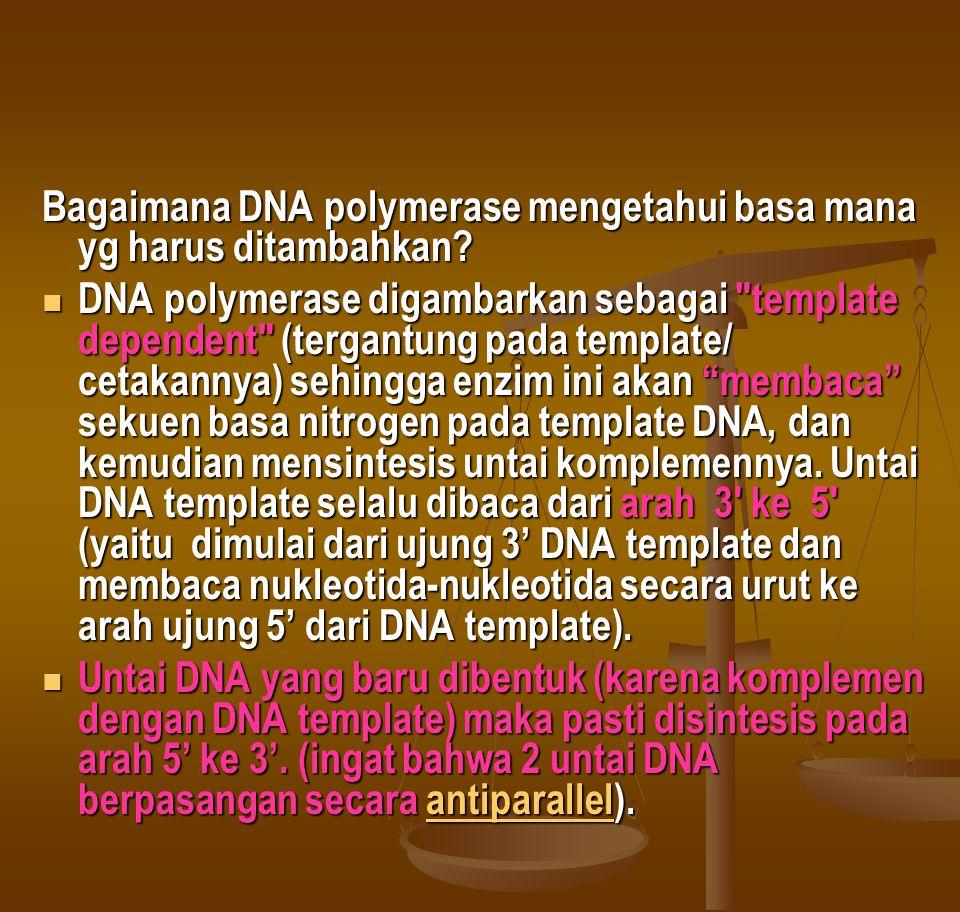 Bagaimana DNA polymerase mengetahui basa mana yg harus ditambahkan