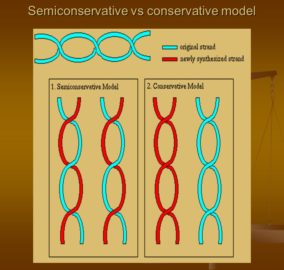 Semiconservative vs conservative model