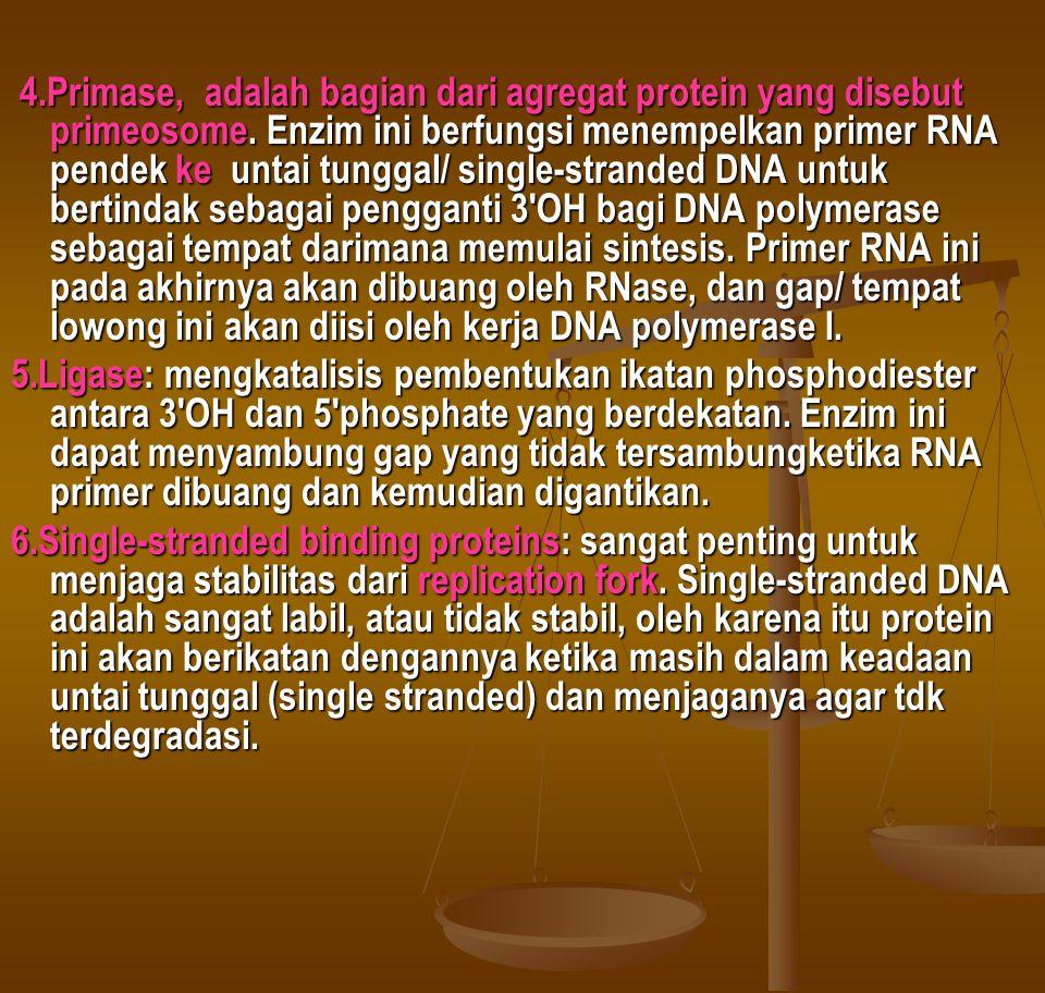 4. Primase, adalah bagian dari agregat protein yang disebut primeosome