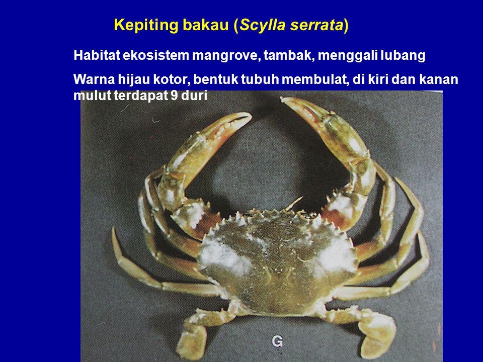 Kepiting bakau (Scylla serrata)