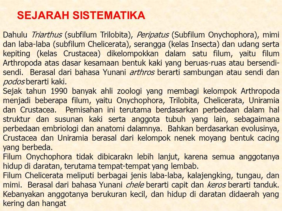 Dahulu Triarthus (subfilum Trilobita), Peripatus (Subfilum Onychophora), mimi dan laba-laba (subfilum Chelicerata), serangga (kelas Insecta) dan udang serta kepiting (kelas Crustacea) dikelompokkan dalam satu filum, yaitu filum Arthropoda atas dasar kesamaan bentuk kaki yang beruas-ruas atau bersendi-sendi. Berasal dari bahasa Yunani arthros berarti sambungan atau sendi dan podos berarti kaki.