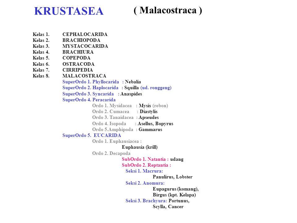 KRUSTASEA ( Malacostraca ) Kelas 1. CEPHALOCARIDA Kelas 2. BRACHIOPODA