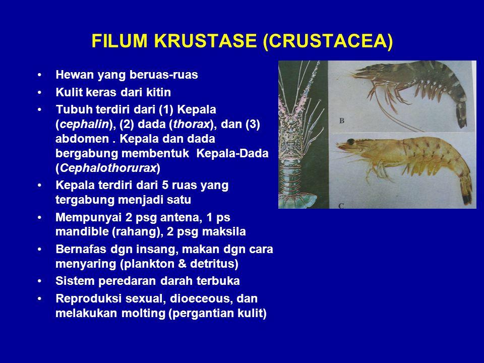 FILUM KRUSTASE (CRUSTACEA)