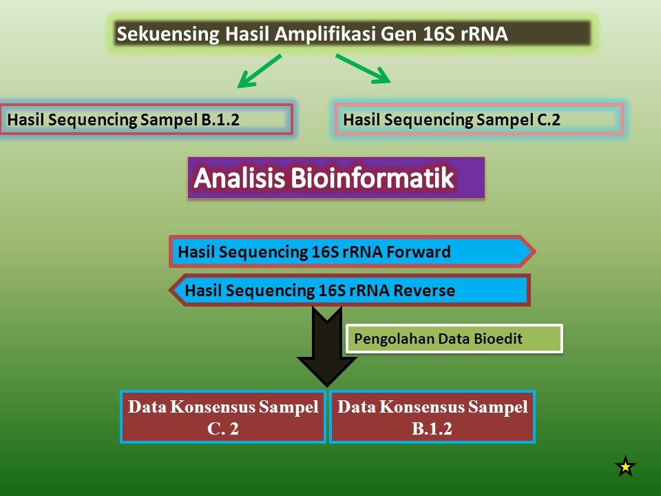 Data Konsensus Sampel C. 2 Data Konsensus Sampel B.1.2