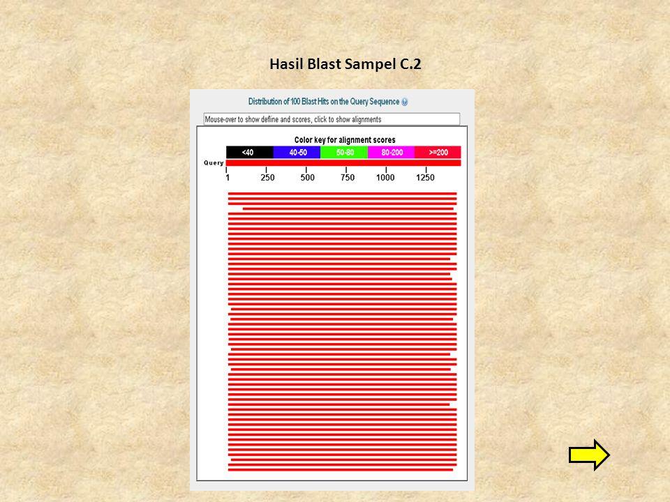 Hasil Blast Sampel C.2