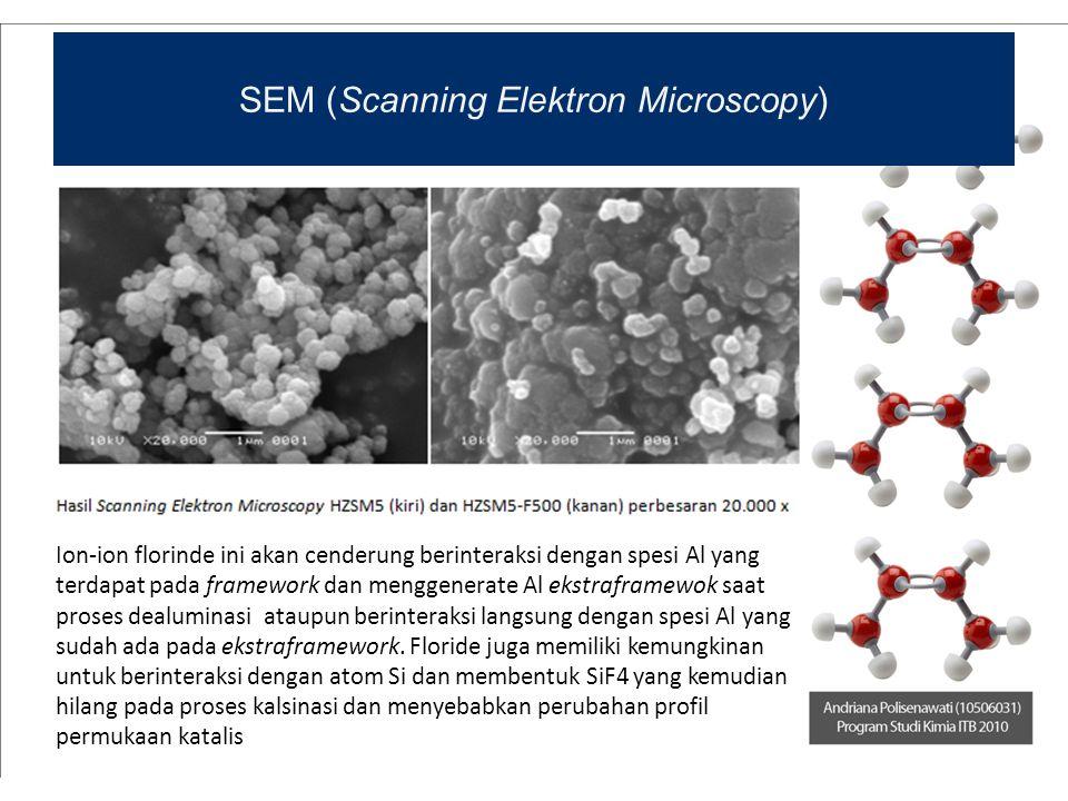 SEM (Scanning Elektron Microscopy)