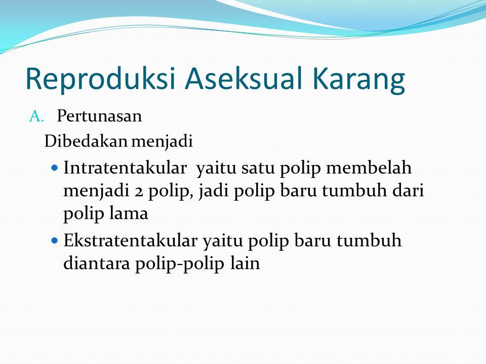 Reproduksi Aseksual Karang