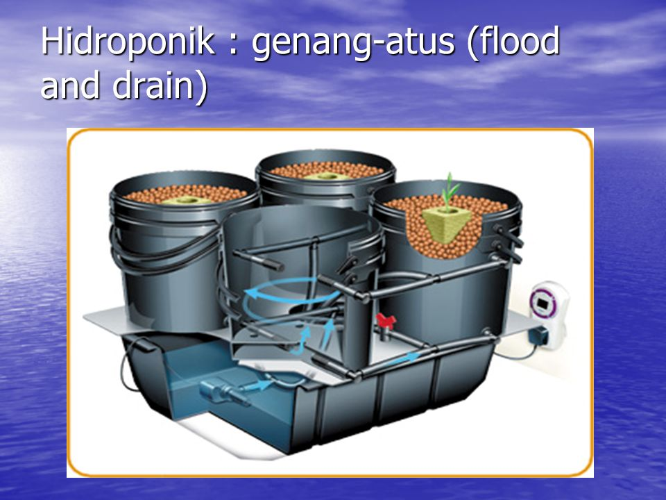 Hidroponik : genang-atus (flood and drain)