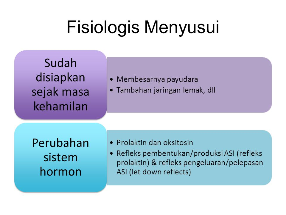 Fisiologis Menyusui Sudah disiapkan sejak masa kehamilan
