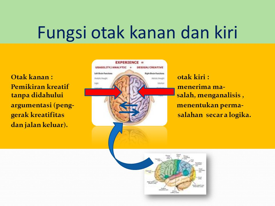 Fungsi otak kanan dan kiri