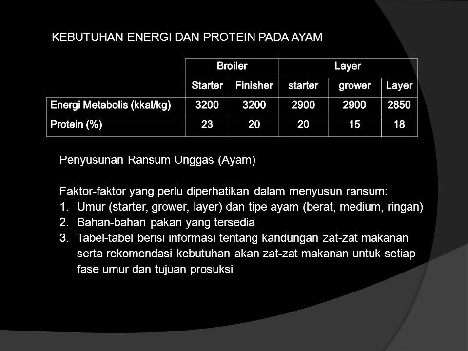 KEBUTUHAN ENERGI DAN PROTEIN PADA AYAM