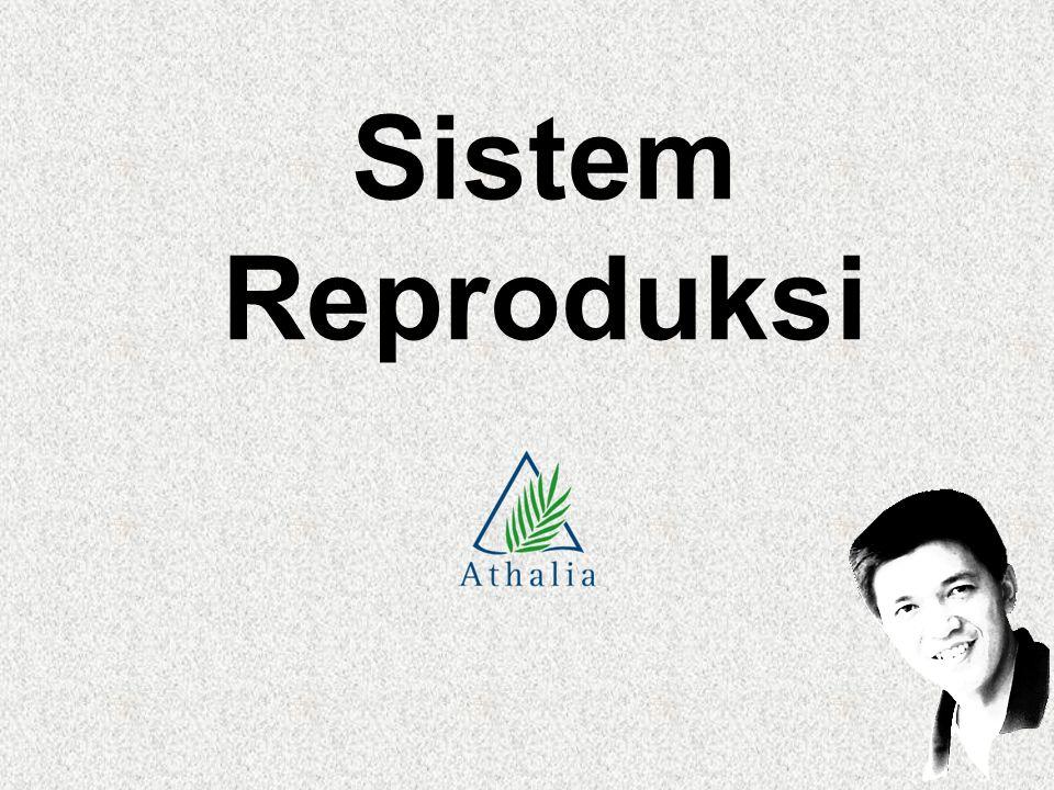 Sistem Reproduksi