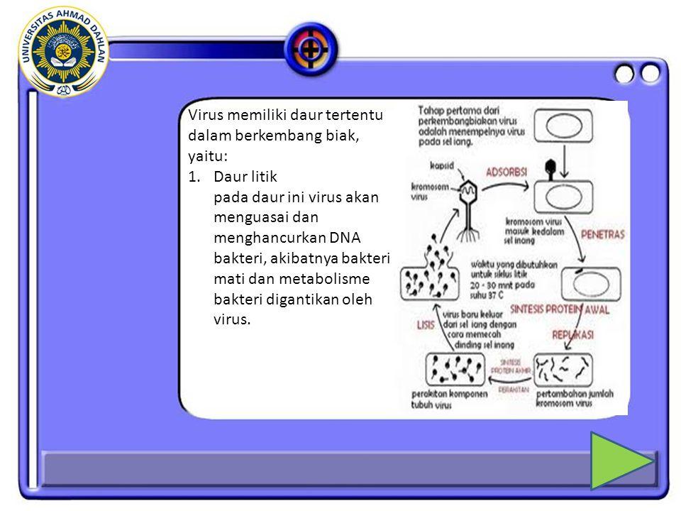 Virus memiliki daur tertentu dalam berkembang biak, yaitu: