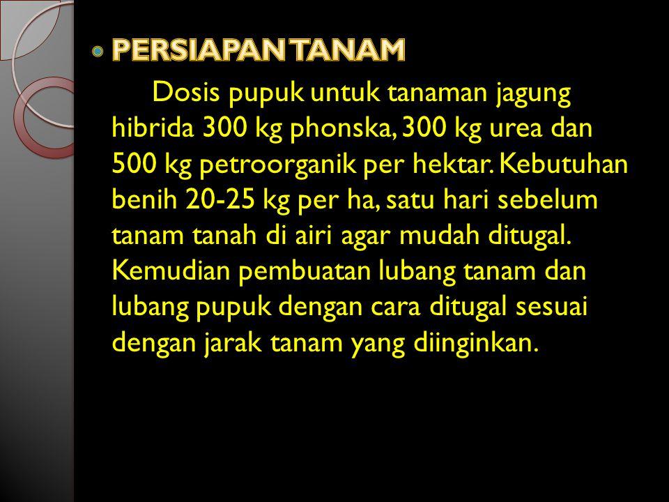PERSIAPAN TANAM
