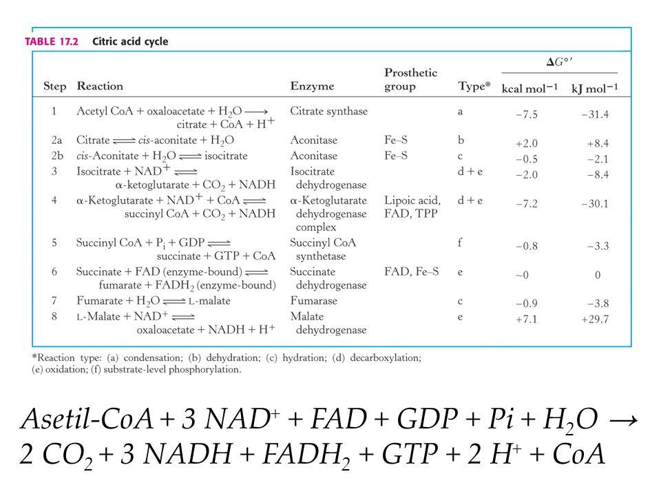 Asetil-CoA + 3 NAD+ + FAD + GDP + Pi + H2O → 2 CO2 + 3 NADH + FADH2 + GTP + 2 H+ + CoA