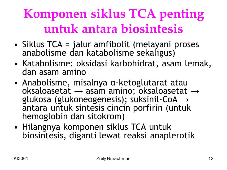 Komponen siklus TCA penting untuk antara biosintesis