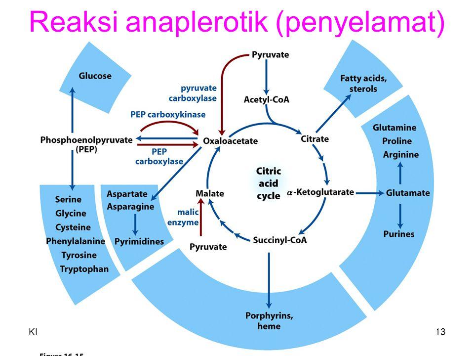 Reaksi anaplerotik (penyelamat)