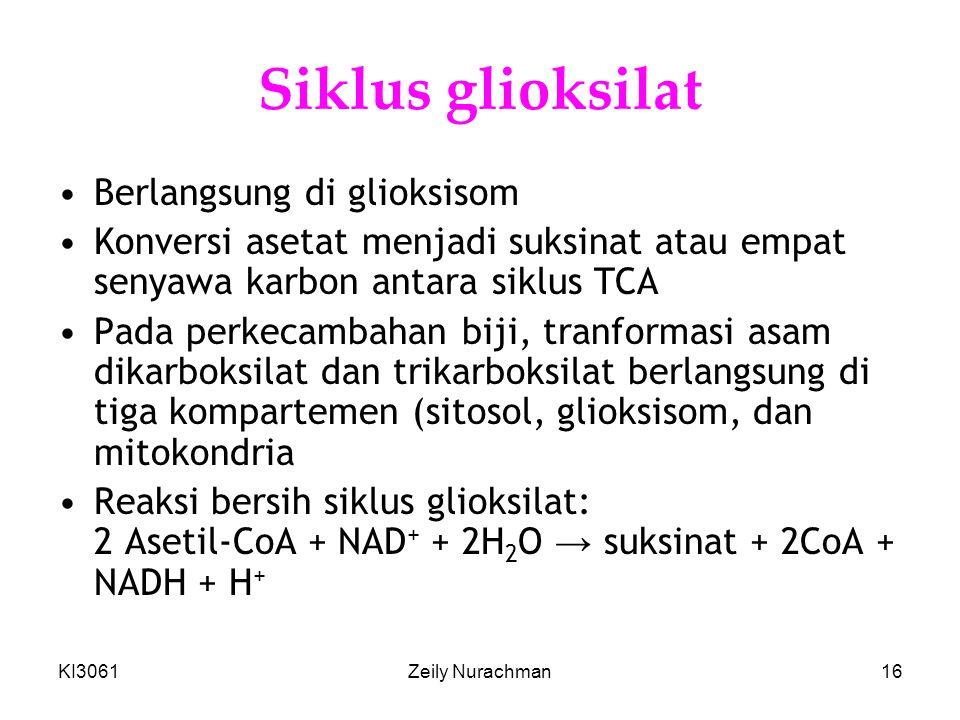 Siklus glioksilat Berlangsung di glioksisom