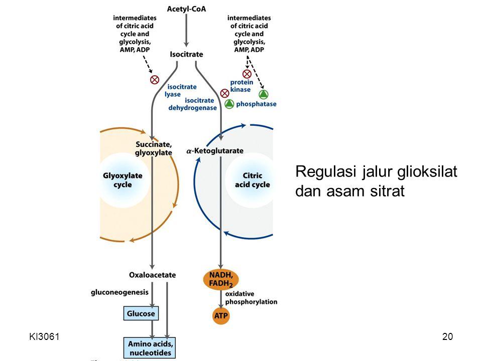 Regulasi jalur glioksilat dan asam sitrat