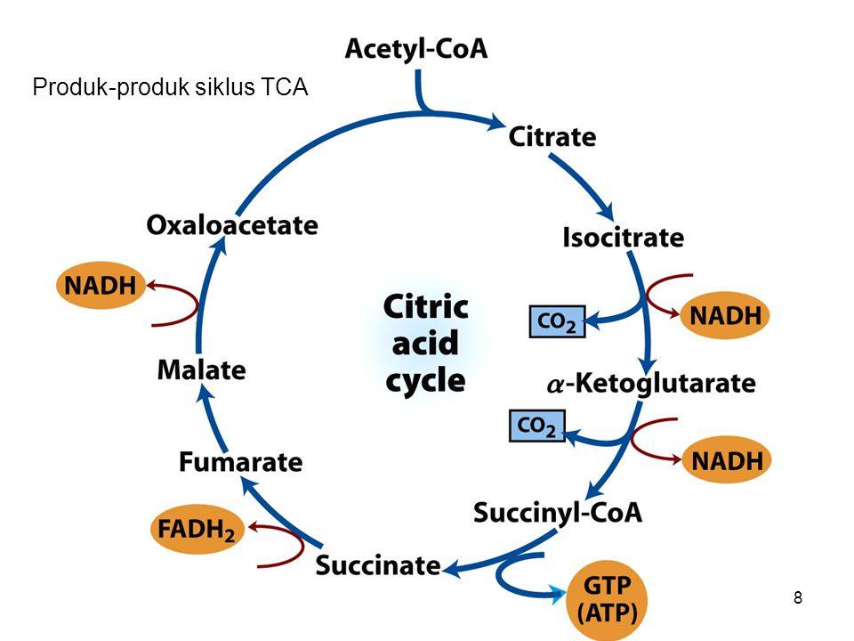 Produk-produk siklus TCA