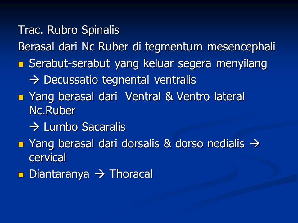 Trac. Rubro Spinalis Berasal dari Nc Ruber di tegmentum mesencephali. Serabut-serabut yang keluar segera menyilang.