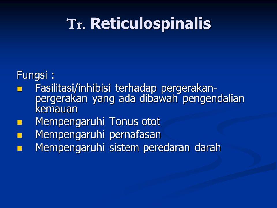 Tr. Reticulospinalis Fungsi :