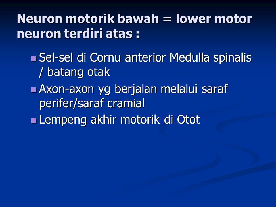 Neuron motorik bawah = lower motor neuron terdiri atas :