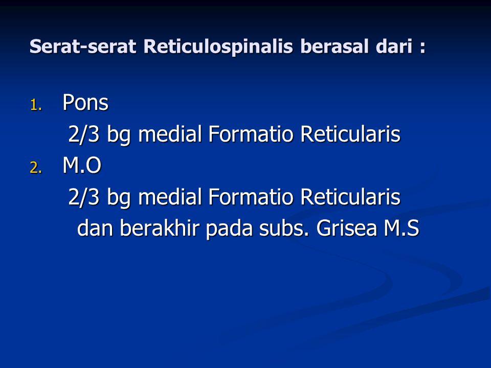 Serat-serat Reticulospinalis berasal dari :