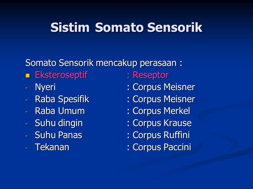 Sistim Somato Sensorik