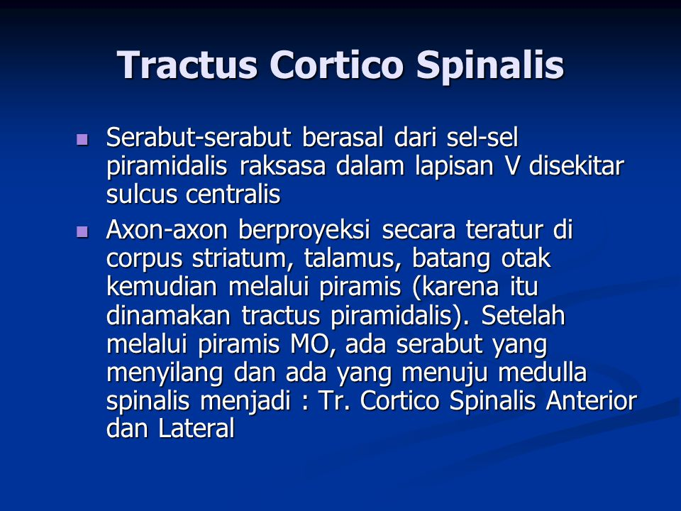 Tractus Cortico Spinalis