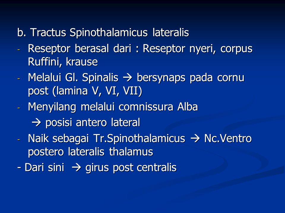 b. Tractus Spinothalamicus lateralis