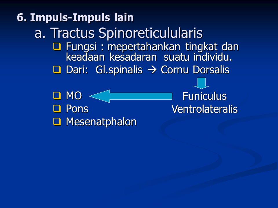 Funiculus Ventrolateralis