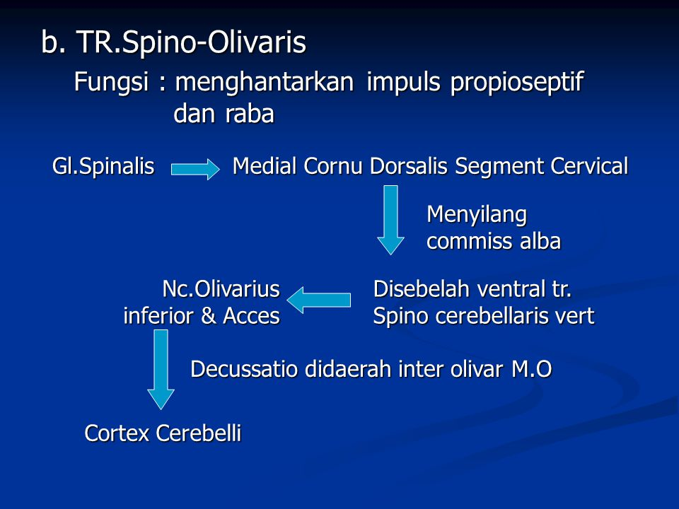 b. TR.Spino-Olivaris Fungsi : menghantarkan impuls propioseptif dan raba. Gl.Spinalis. Medial Cornu Dorsalis Segment Cervical.