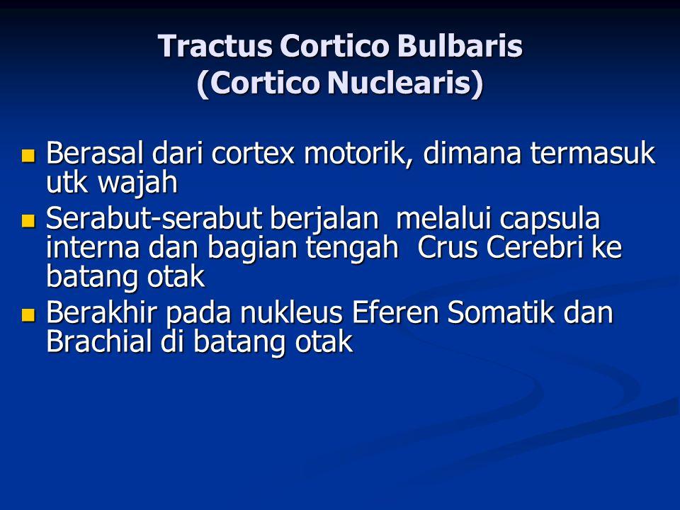 Tractus Cortico Bulbaris (Cortico Nuclearis)