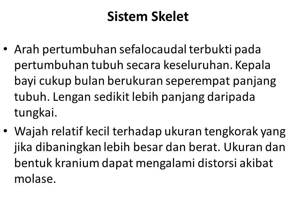 Sistem Skelet