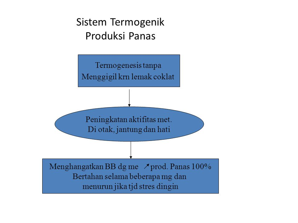 Sistem Termogenik Produksi Panas
