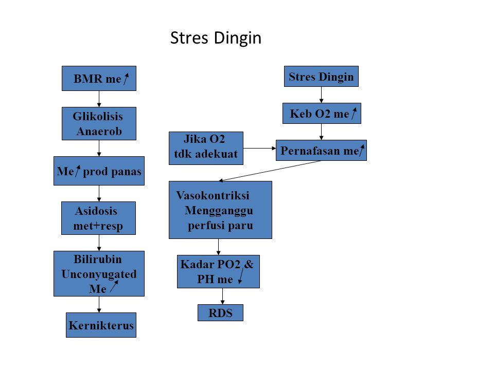 Stres Dingin BMR me Stres Dingin Keb O2 me Glikolisis Anaerob Jika O2