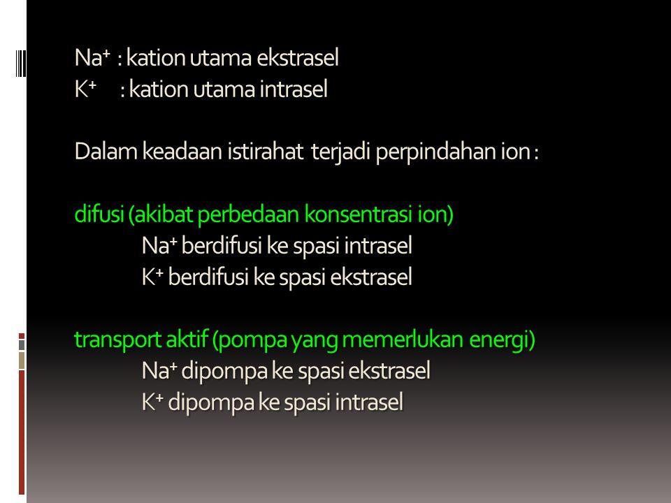 Na+ : kation utama ekstrasel K+ : kation utama intrasel Dalam keadaan istirahat terjadi perpindahan ion : difusi (akibat perbedaan konsentrasi ion) Na+ berdifusi ke spasi intrasel K+ berdifusi ke spasi ekstrasel transport aktif (pompa yang memerlukan energi) Na+ dipompa ke spasi ekstrasel K+ dipompa ke spasi intrasel