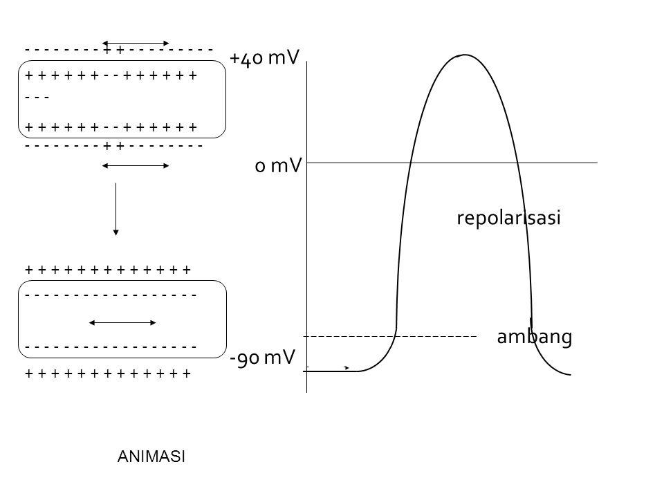 +40 mV 0 mV repolarisasi ambang -90 mV