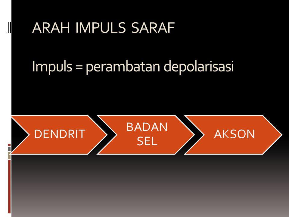 ARAH IMPULS SARAF Impuls = perambatan depolarisasi