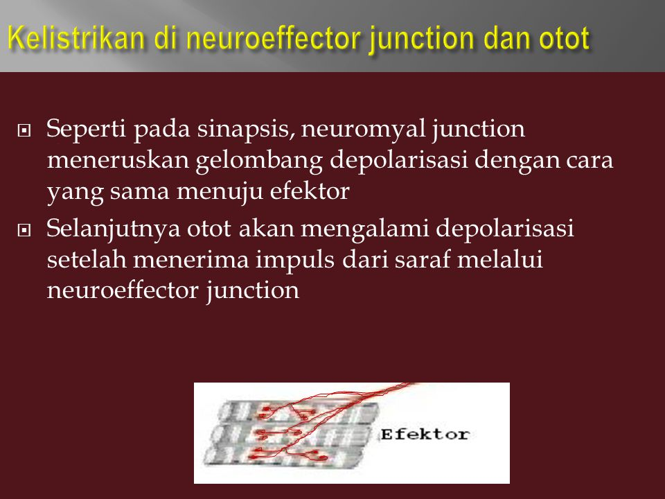Kelistrikan di neuroeffector junction dan otot