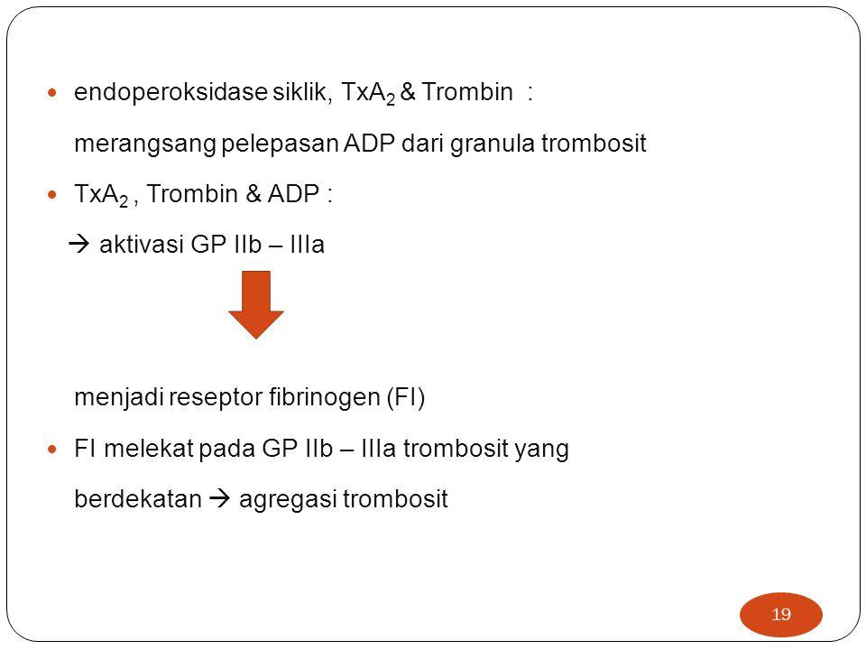 endoperoksidase siklik, TxA2 & Trombin :
