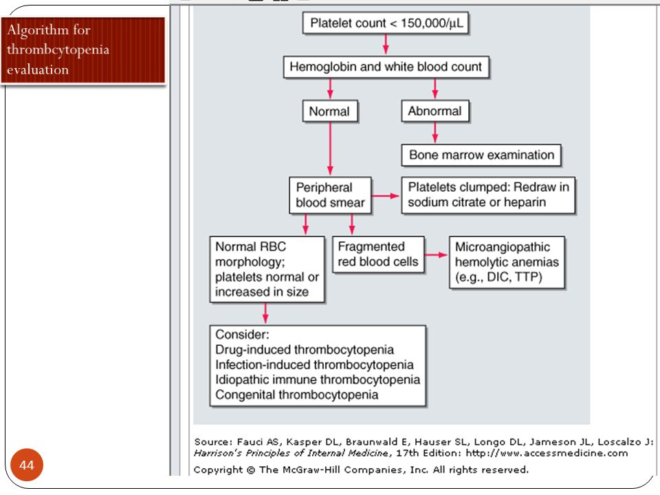 Algorithm for thrombcytopenia evaluation