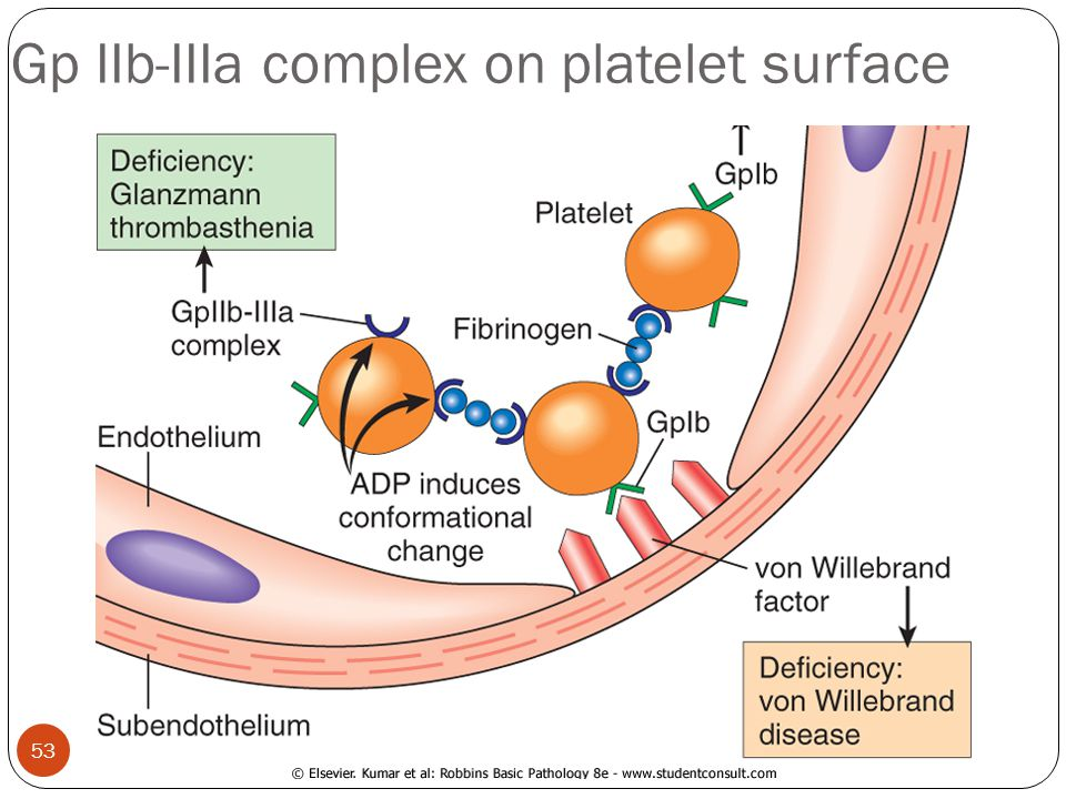 Gp IIb-IIIa complex on platelet surface