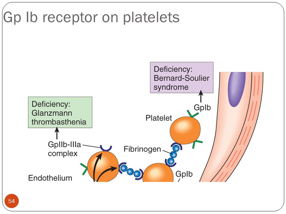Gp Ib receptor on platelets