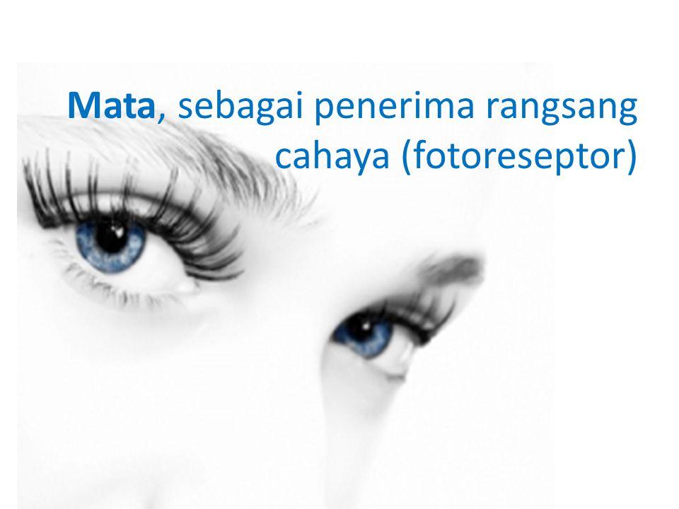 Mata, sebagai penerima rangsang cahaya (fotoreseptor)